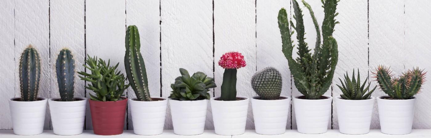 Top 5 Easy Houseplants You'll Grow to Love Main Photo