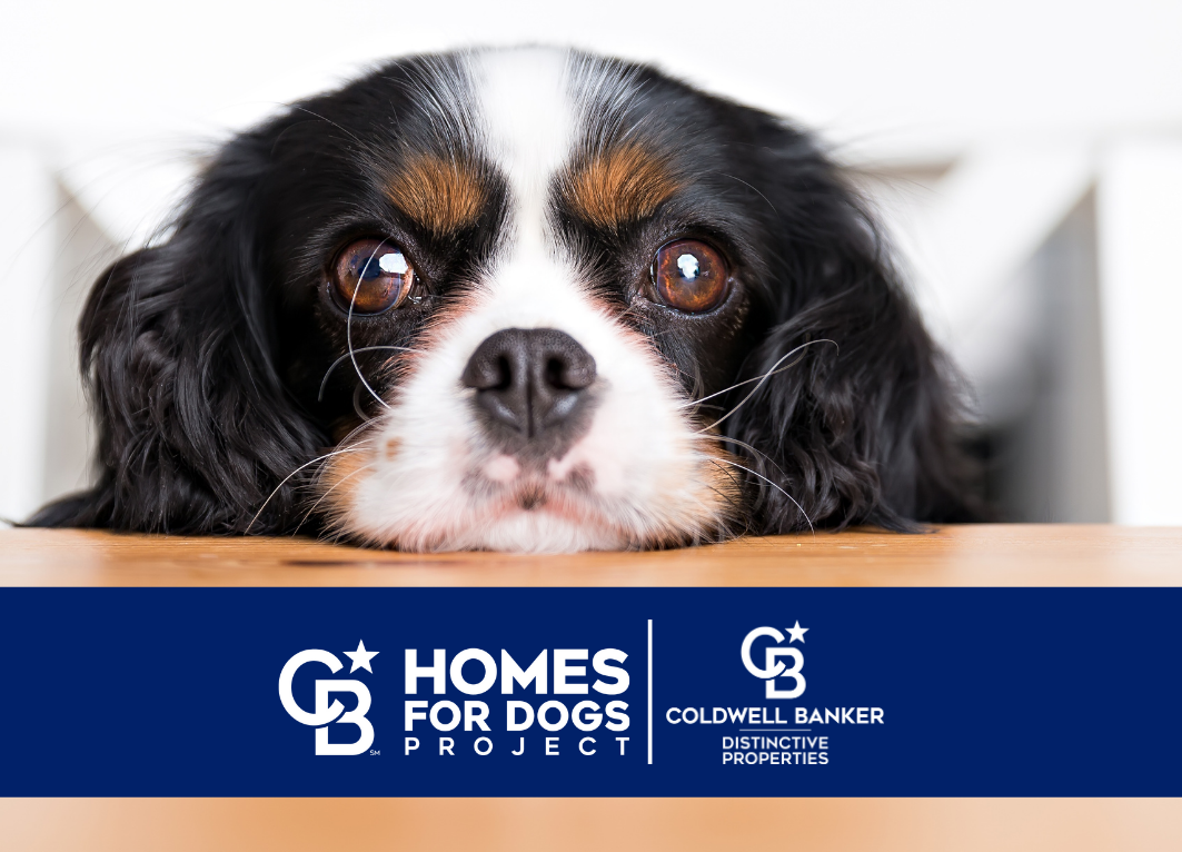 Coldwell Banker Distinctive Properties Helps Find FURever Homes for 107 Pets! Main Photo