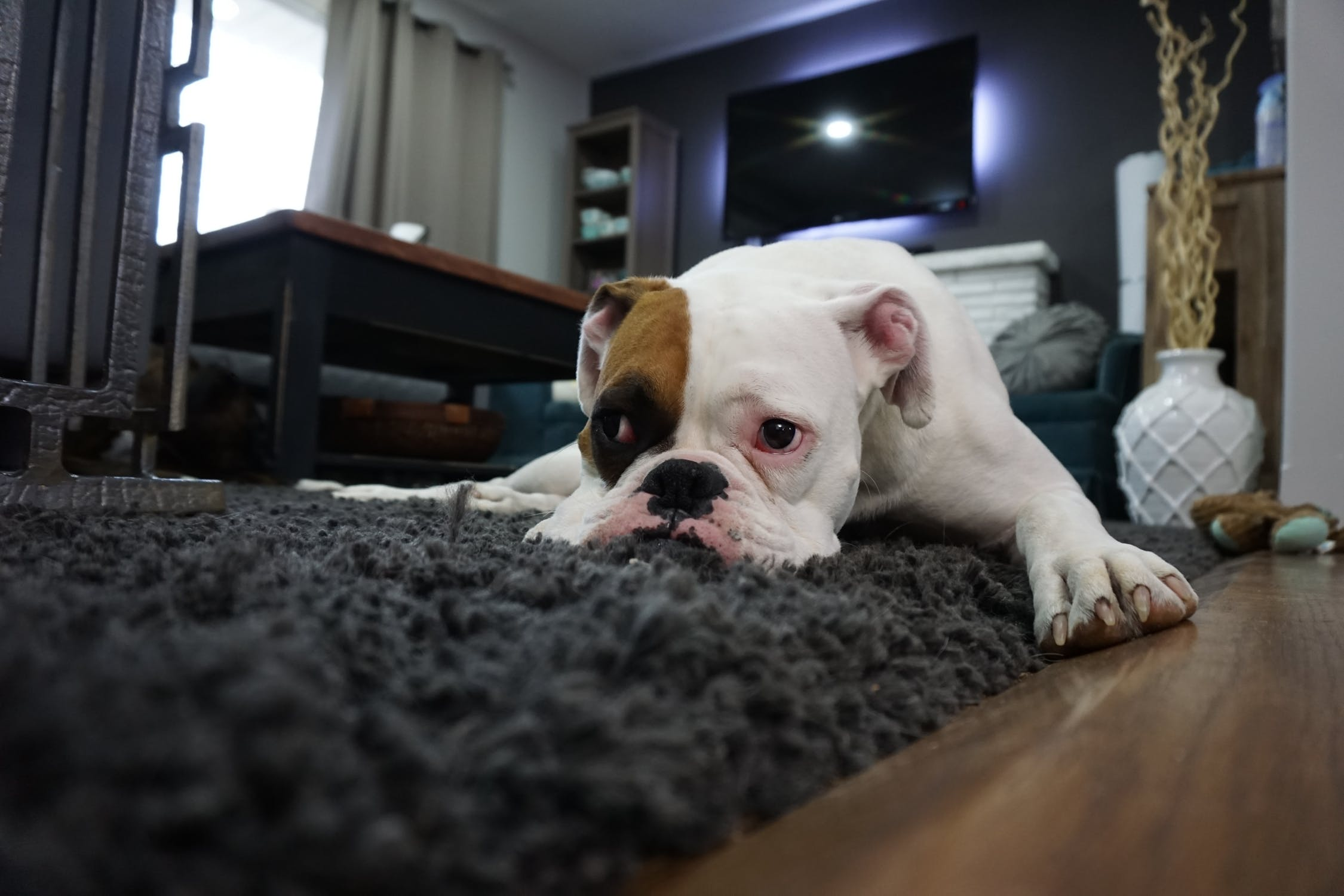 5 Smart Home Gadgets for Your Pets Main Photo