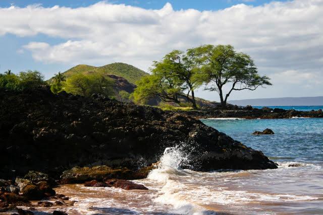 Maui Visitors FYI Main Photo