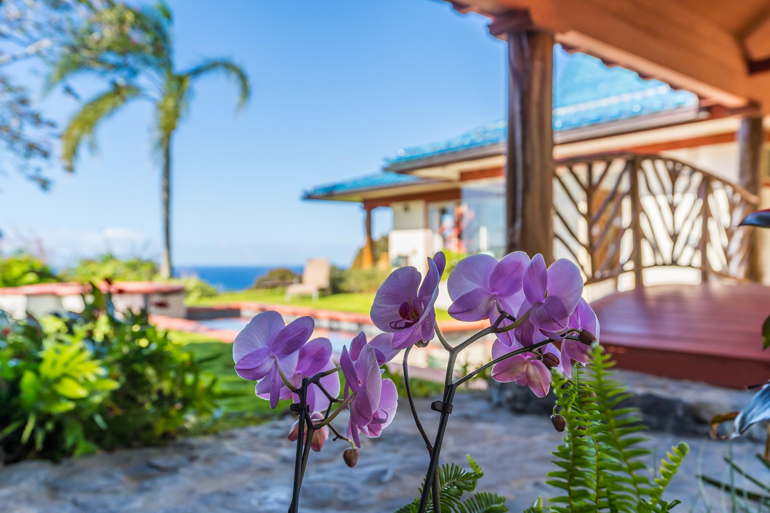 Paia Real Estate Lifestyle Photo 02