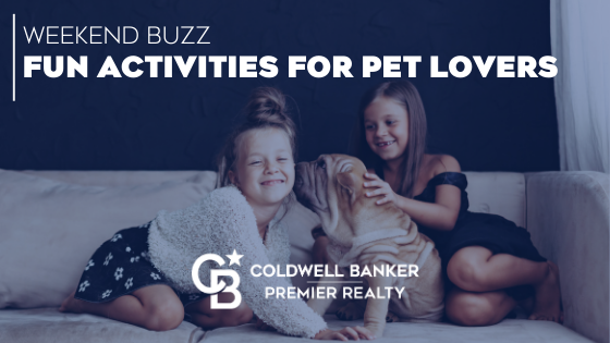 Fun Activities for Pet Lovers to Try This Weekend Main Photo