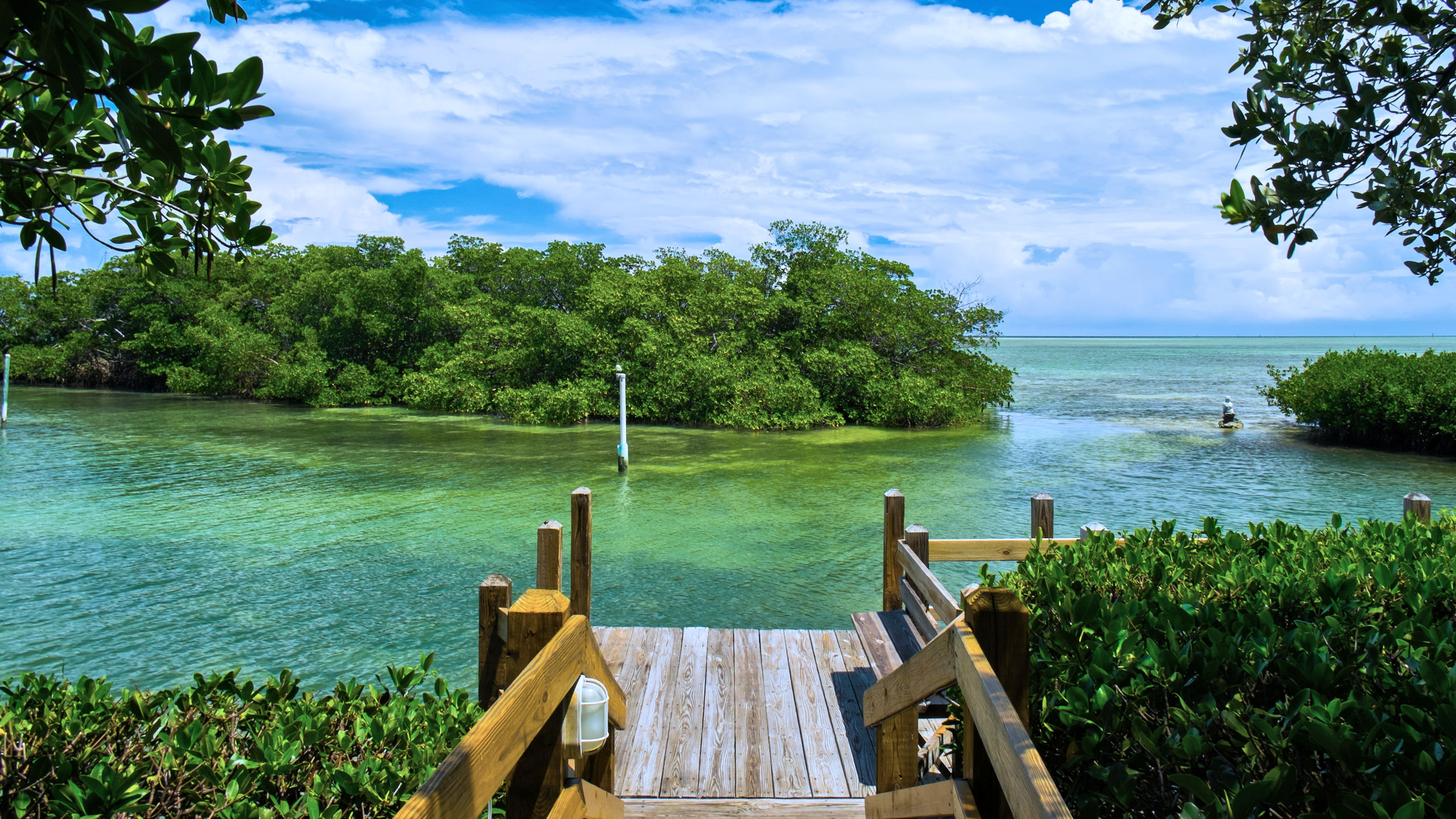 https://cust.iqcdn.net/iq_cb_schmitt/images/imagelibrary/images//mangroves-shutterstock_145369933.jpg