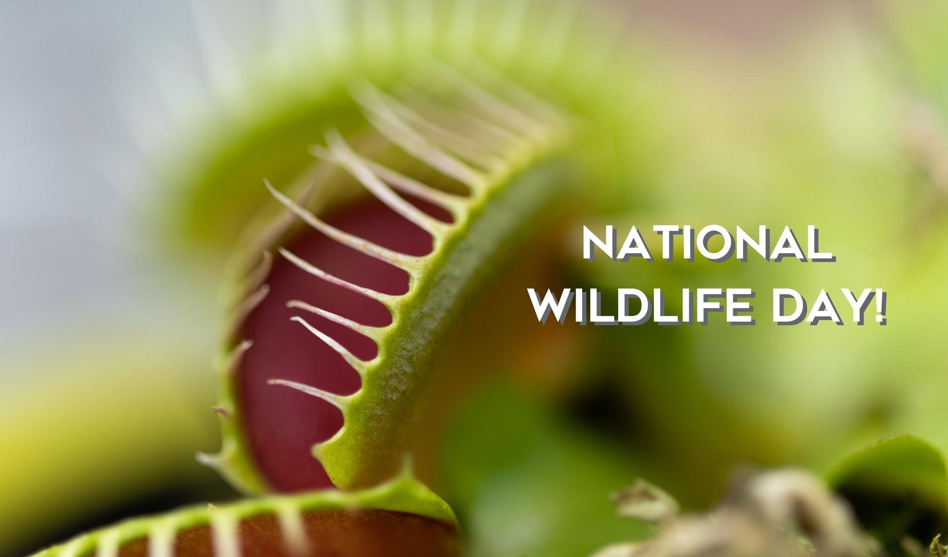 National Wildlife Day! Main Photo
