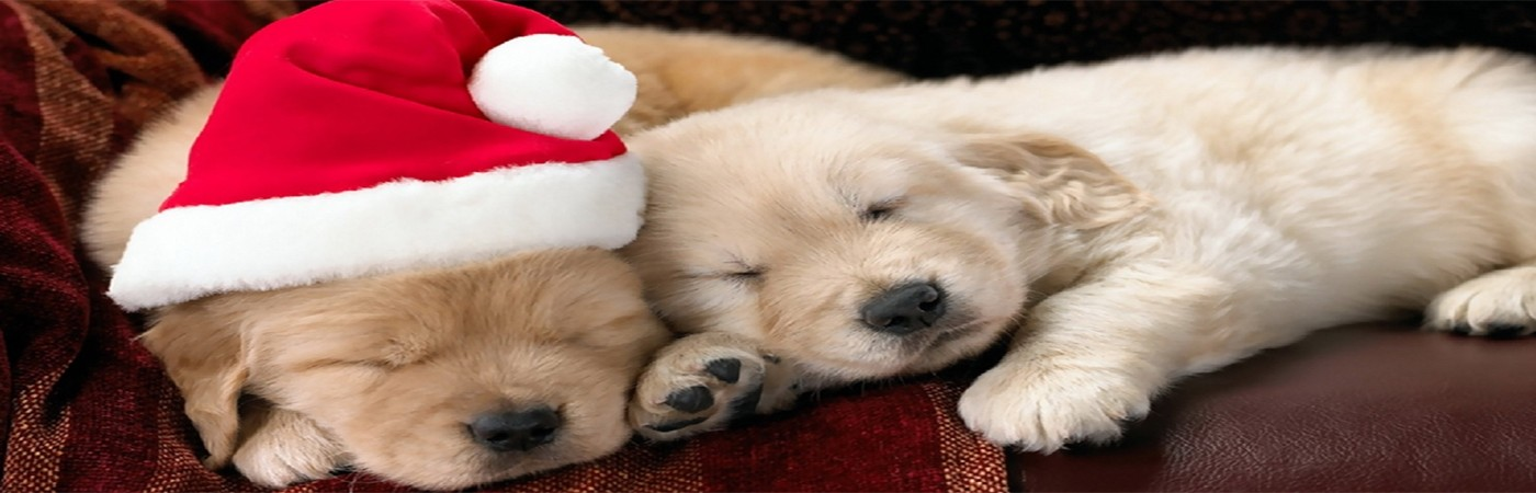 The Most PAWesome Christmas Gifts For Dogs Main Photo