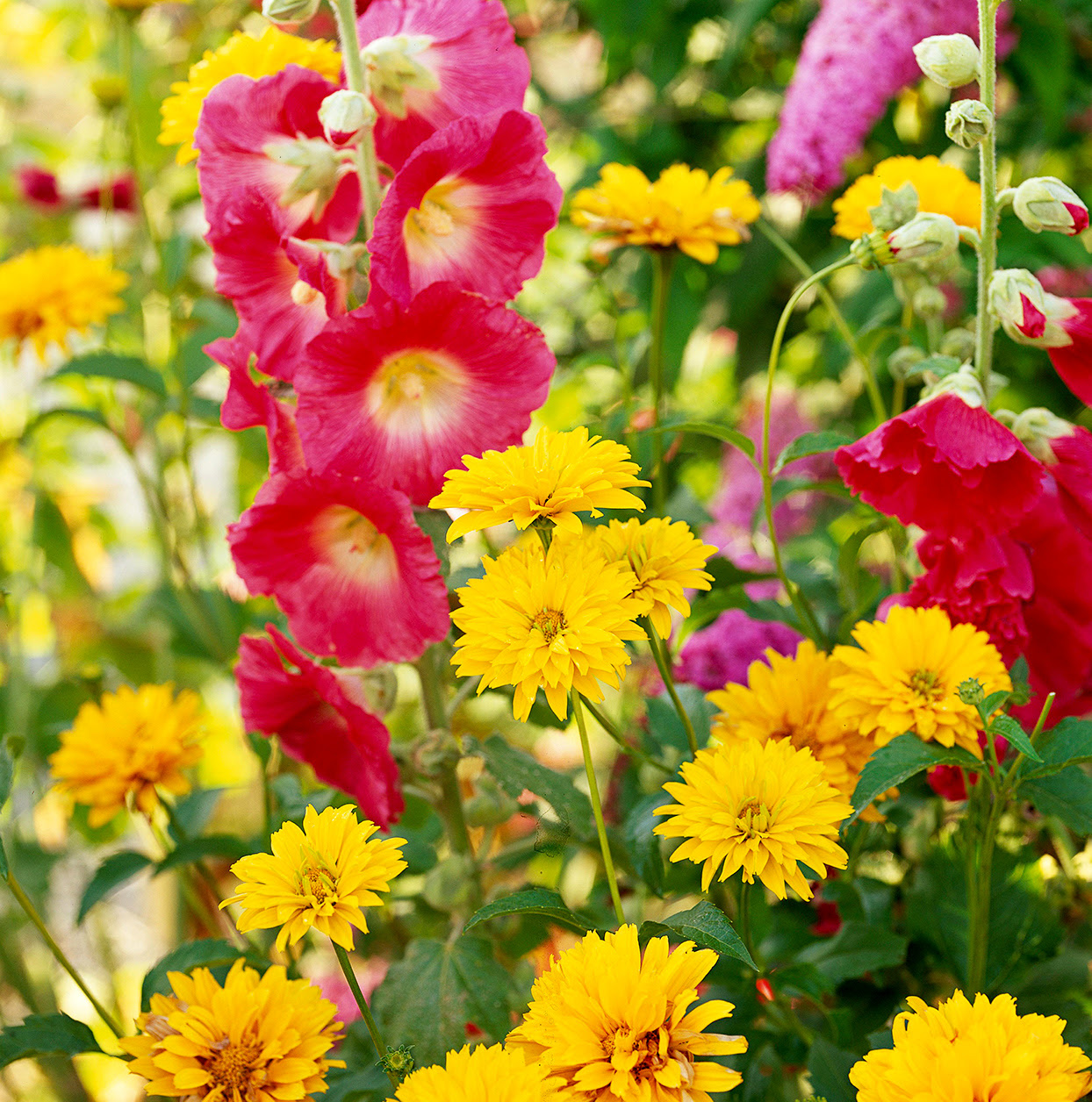 24 Perennial Plants That Look Amazing All Summer Long Main Photo